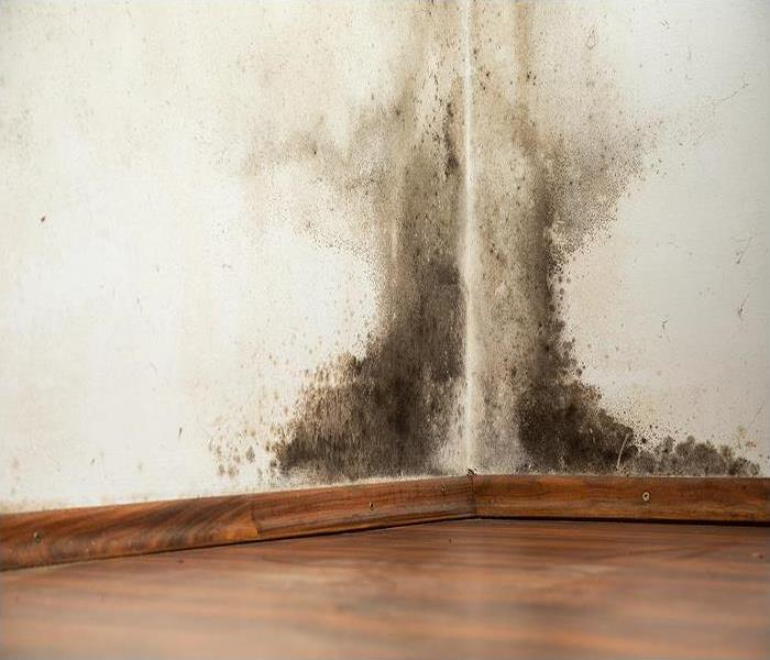 Mold Remediation What causes mold in a house?